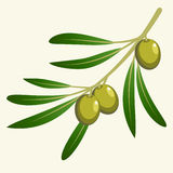 Vector olive branch Stock Photos