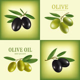 Vector olive oil. Decorative olive branch. For label, pack. Stock Image