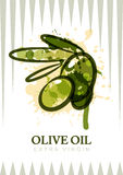 Vector olive oil label design. Watercolor olives isolated illustration. Agriculture, organic natural food background. Concept for cosmetics label, package Royalty Free Stock Images