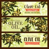 Vector olive oil product olives sketch banners. Olive oil organic extra virgin olive oil sketch banners for natural product design template. Vector green olives royalty free illustration