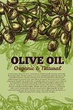 Vector olives bunch poster for olive oil Stock Photos