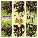 Vector olives bunch sketch banners for olive oil. Black olives sketch banners for olive oil organic natural product. Vector design template of leaves and green Stock Photography