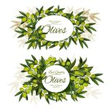 Extra virgin olive bunch round label. Vector olives posters, surrounded by green olive branches, fruits and leaves. Extra virgin organic olive tree greenery with stock illustration