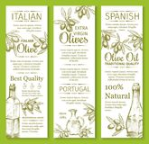 Vector olives sketch banners for organic olive oil. Olive oil sketch banners of green and black olives for extra virgin product bottle packing label design Stock Photography