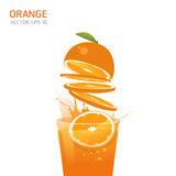 Vector orange fruit. Illustration EPS 10 Royalty Free Stock Photo