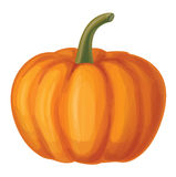 Vector orange pumpkin isolated. Royalty Free Stock Photos