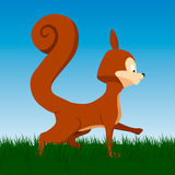 Vector orange squirrel on background. Vector orange squirrel on natural background Royalty Free Stock Images