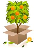 Vector orange tree. Royalty Free Stock Image