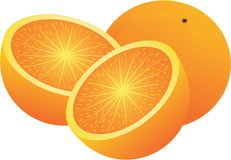 Vector oranges Stock Image