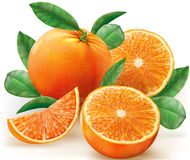 Vector oranges fruits Royalty Free Stock Photo
