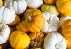 Vector oranje illustratie voor ontwerp Royalty-vrije Stock Foto's