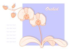 Vector orchid. Royalty Free Stock Photography