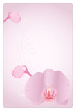 Vector orchid. Vector illustration with orchid for greeting card Stock Photos