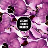 Vector orchid banner