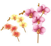 Vector orchid flowers Stock Image