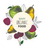 Vector organic eco food banner, poster. Hand drawn fruit royalty free illustration