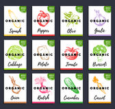 Vector organic vegetables cards set. Farm eco products tags collection. Hand sketched greens illustration.  Stock Images