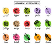 Vector organic vegetables cards set. Farm eco products tags collection. Hand sketched greens illustration.  Royalty Free Stock Images