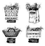 Vector organic vegetables images set. Farm products illustrations. Hand sketched baskets, box and bag with greens. Vector organic vegetables logotypes set. Farm Stock Images