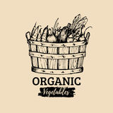 Vector organic vegetables logo. Farm eco products illustration. Hand sketched basket with greens. Rural harvest poster. Stock Photos
