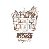 Vector organic vegetables logo. Farm eco products illustration. Hand sketched basket with greens. Rural harvest poster. Royalty Free Stock Photography