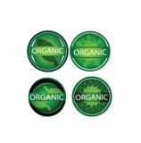 Vector organische geplaatste etiketten, natuurlijk, groen blad, milieu, het grafische ontwerp van aardelementen Royalty-vrije Stock Foto