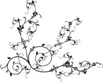 Vector ornament Stock Images