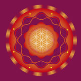 Ornamental esoteric solar lotus Stock Image