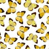 Vector. Ornamento inconsútil con la mariposa Fotografía de archivo
