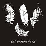 Vector Ornate Set of Stylized and Silhouette Abstract. Vector Ornate Set of Stylized and Abstract Silhouette Feathers. Elements for Design and Coloring Pages Stock Photo