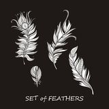 Vector Ornate Set of Stylized and Silhouette Abstract. Vector Ornate Set of Stylized and Abstract Silhouette Zentangle Feathers. Elements for Design and Royalty Free Stock Photo