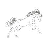 Vector outline drawing horses. The horse gallops, mane and tail fluttering. Royalty Free Stock Image