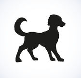 Vector outline drawing. Purebred dogs and mongrels Stock Images