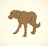 Vector outline drawing. Purebred dogs and mongrels stock illustration