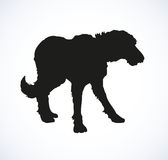 Vector outline drawing. Purebred dogs and mongrels Royalty Free Stock Photo