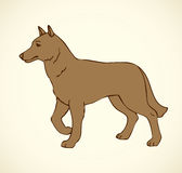 Vector outline drawing. Purebred dogs and mongrels Stock Photography