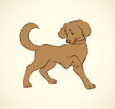 Vector outline drawing. Purebred dogs and mongrels Royalty Free Stock Image