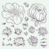 Vector Outline Flowers Sketch Set Stock Photography