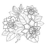 Vector outline Gardenia flower bunch, bud and ornate leaves in black isolated on white background. Bouquet with tropical flowers. Vector outline Gardenia flower Royalty Free Stock Photography