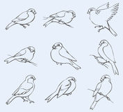 Vector outline image. Set of tits and bullfinches Royalty Free Stock Images