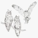 Vector owl Stock Images
