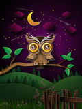 Vector of owl and moon. Stock Photo