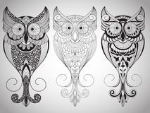 Vector Owls Stock Photo