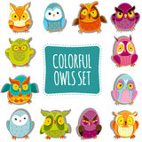 Vector Owls Stock Photos