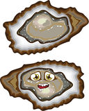 Vector Oysters Stock Photo