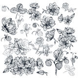 Vector pack of engraved high detailed flowers for design Royalty Free Stock Image
