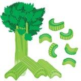 Vector painterly celery set editable, scalable illustration. royalty free illustration