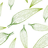 Vector painting of green grass seamless pattern background  with hand drawn Stock Photography