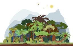Vector a paisagem tropical da floresta úmida com palmas e outras árvores tropicais Ilustração panorâmico da floresta tropical lis ilustração do vetor