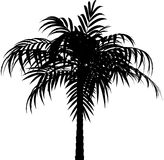 Vector palm Royalty Free Stock Images